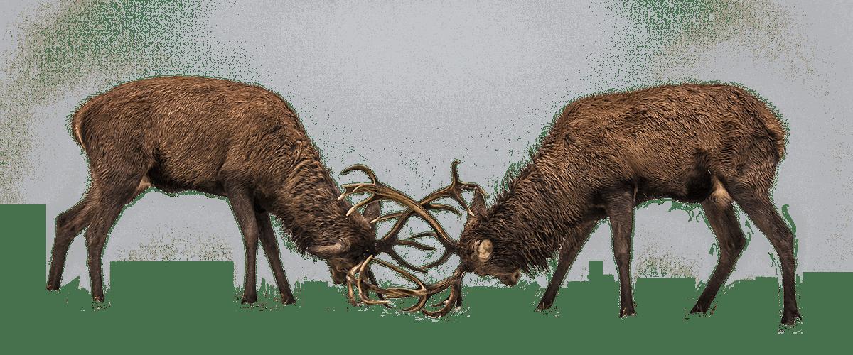 Gamme Origine, le bois au naturel par RahuelBois