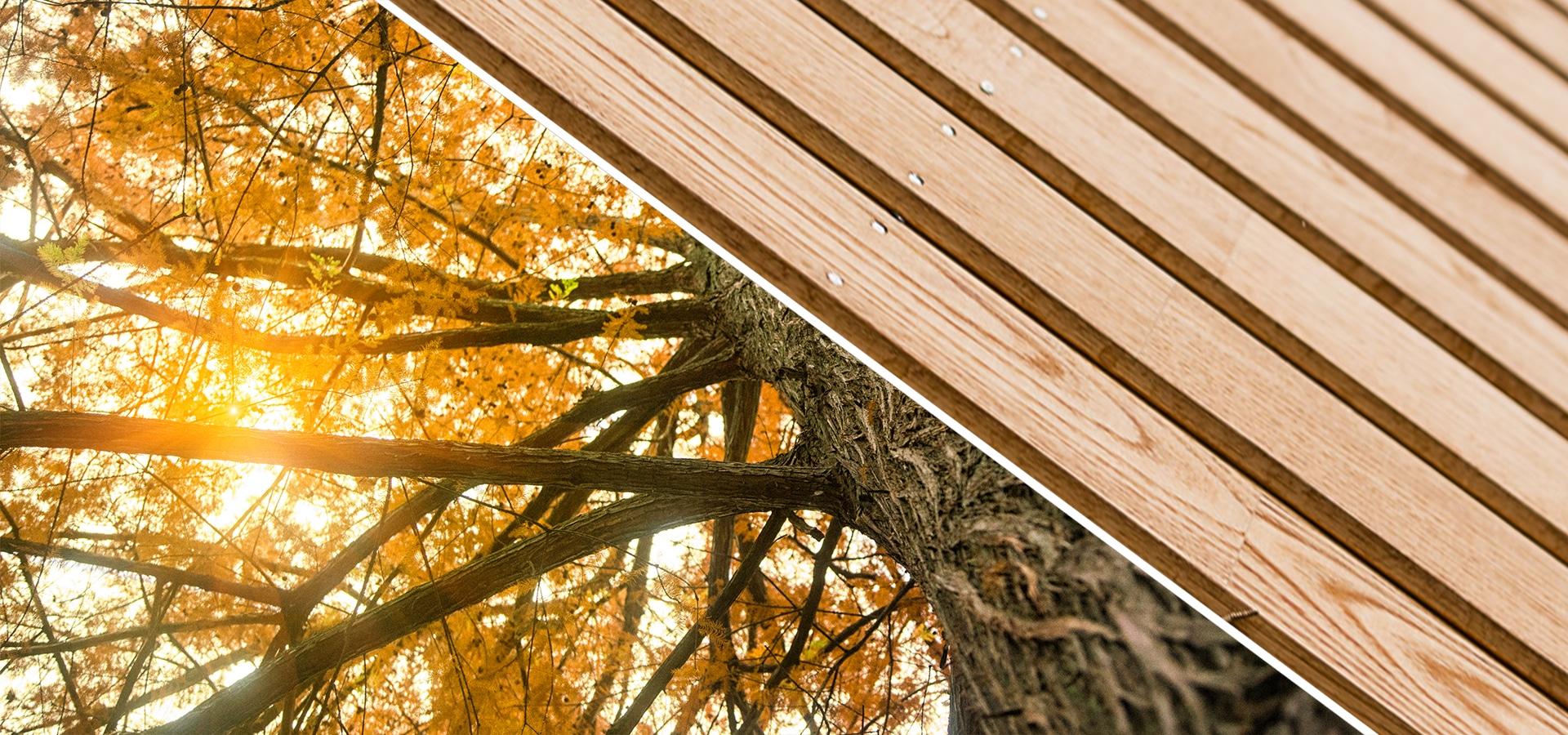 Notre scierie en Bretagne, RahuelBois, maîtrise les process de l'arbre aux produits finis